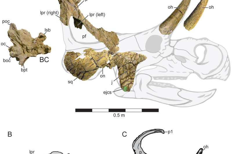 New horned dinosaur had spikes at back of neck shield