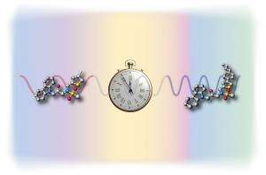 Newly synthesised molecules turn back biological clock
