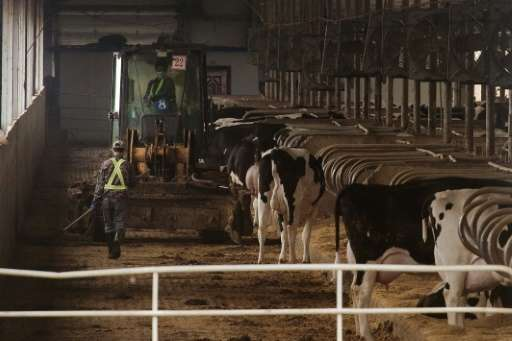 New mega farms designed to satisfy China's demand for dairy products create an unwanted byproducts in huge mounds of manure