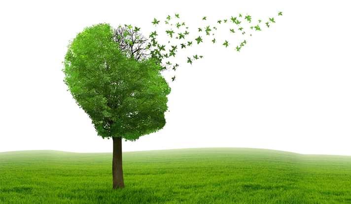 New model for studying Alzheimer's disease