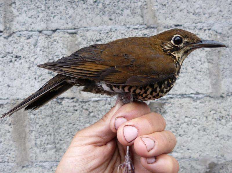 New species of bird discovered in India and China by international team of scientists
