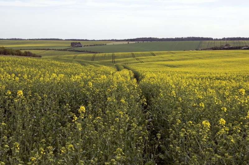 New study: Neonicotinoid insecticides linked to wild bee decline across England