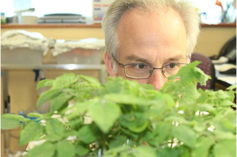 New study of CRISPR-Cas9 technology shows potential to improve crop efficiency