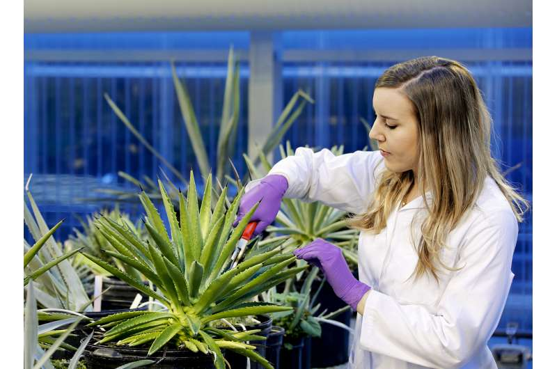 New study of water-saving plants advances efforts to develop drought-resistant crops
