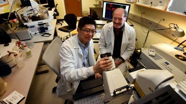 New target identified for reducing cancer metastasis