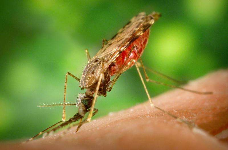 New targets for vaccines identified on the surface of the malaria parasite