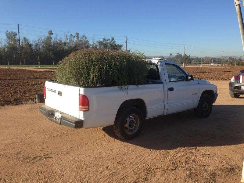 New tumbleweed species rapidly expanding range