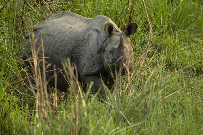 No rhinos poached in Nepal for past two years