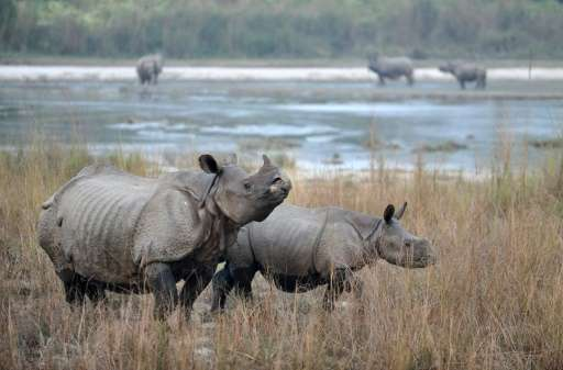 Officials at the San Diego Zoo said that if the current rate of poaching continues, rhinos could become extinct within 15 years