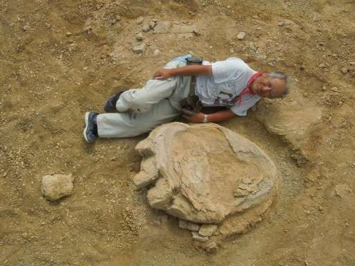Okayama University of Science Professor Shinobu Ishigaki poses next to a dinosaur footprint in the Gobi Desert