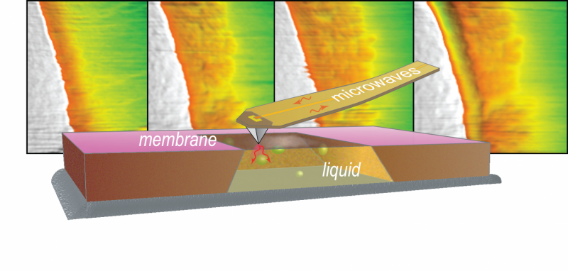 ORNL-NIST team explores nanoscale objects and processes with microwave microscopy