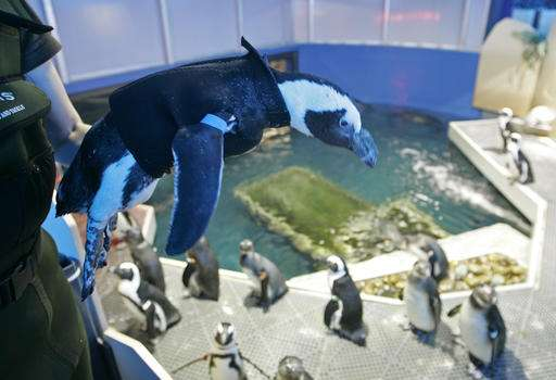 Penguin that wore a wetsuit and starred in kid's book dies