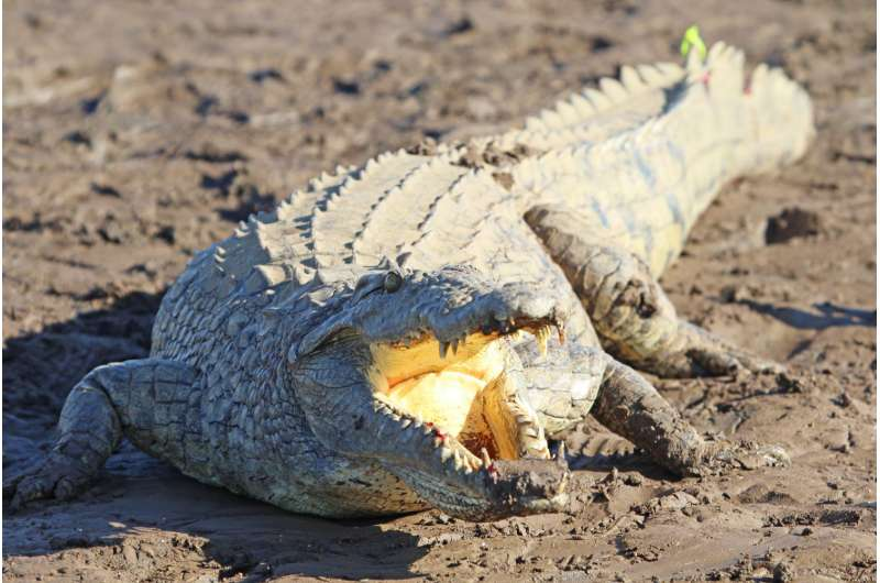 Perfluorinated compounds found in African crocodiles, American alligators