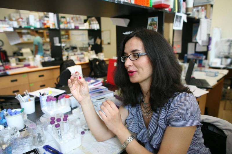 'Person-on-a-chip': U of T engineers grow 3-D heart, liver tissues for better drug testing