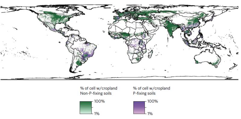Phosphorus 'tax' could be huge if tropical farming intensifies