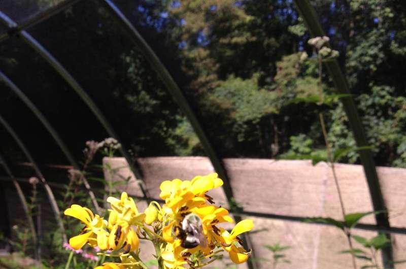 Picky eaters: Bumble bees prefer plants with nutrient-rich pollen