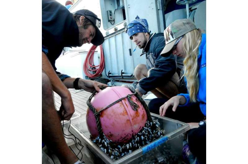 Plastic debris crossing the Pacific can transport more species with the help of barnacles