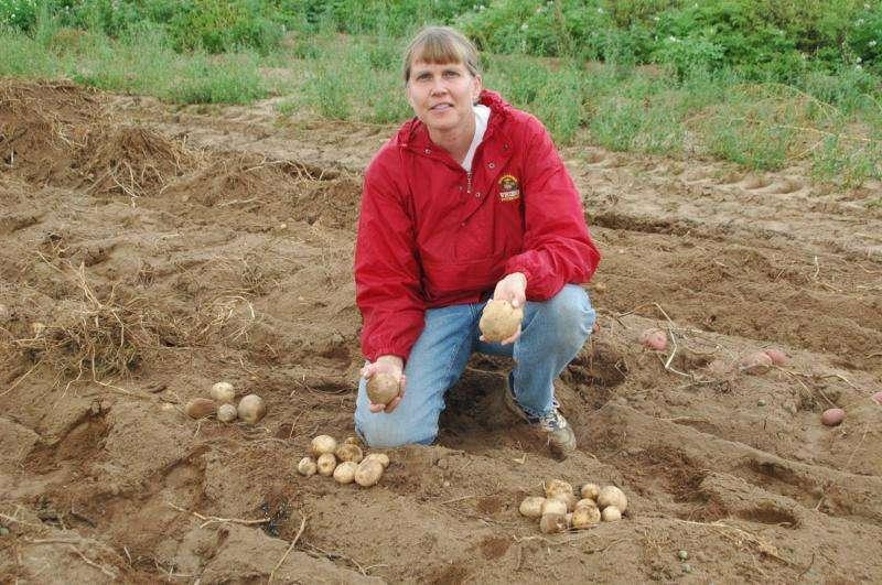 Potatoes wild with calcium