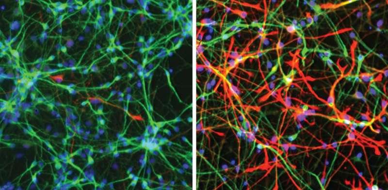 Power up: growing neurons undergo major metabolic shift