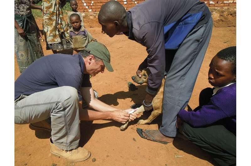 Rabies vaccine effective even after warm storage
