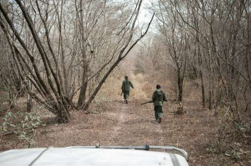 Rangers walk through the dry bush as they search for lions during a lion population count at Yankari Nature Reserve in Nigeria