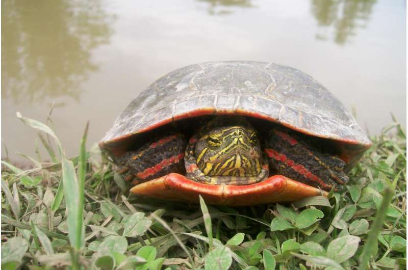 'Red gene' in birds and turtles suggests dinosaurs had bird-like color vision