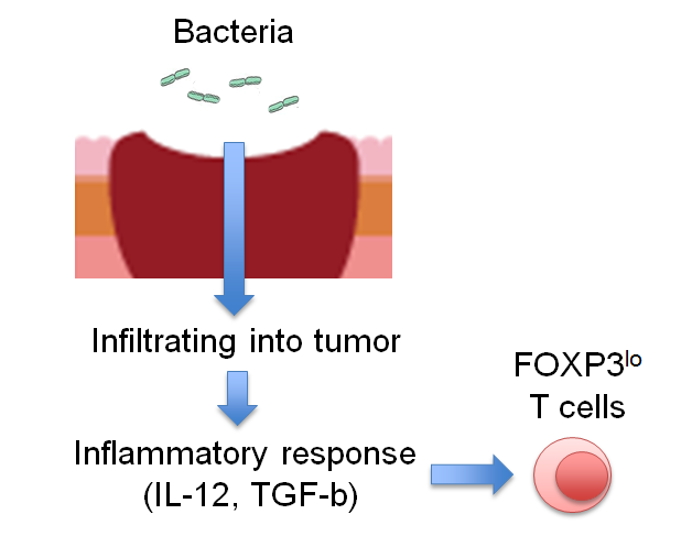 Regulatory T cells' involvement in the progress of colon cancer