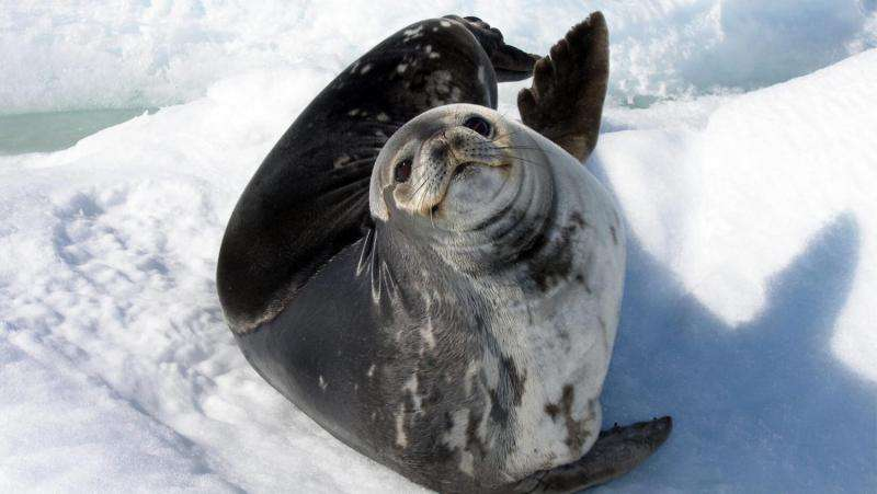 Researcher charts advances in marine mammal genetic sequencing