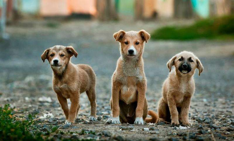 Researcher explores close prehistoric relationship between humans and dogs