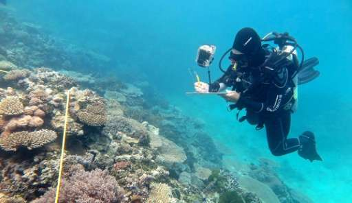 Researcher Grace Frank completes bleaching surveys along a transect line at One Tree Reef, Capricorn Group of Islands on the Gre