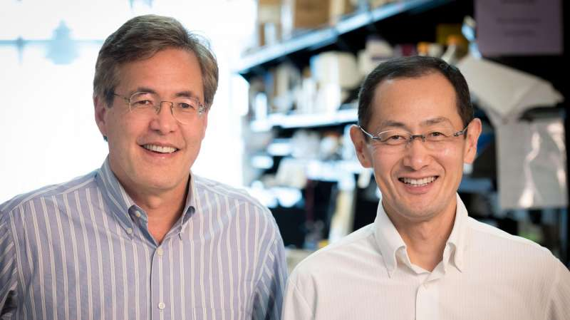 Research on rare genetic disease reveals new stem cell pathway