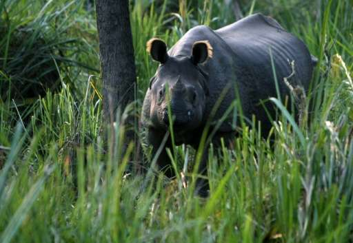 Rhino poaching carries a maximum penalty of 15 years in jail and a 100,000-rupee ($1,000) fine in Nepal, which is now home to ov