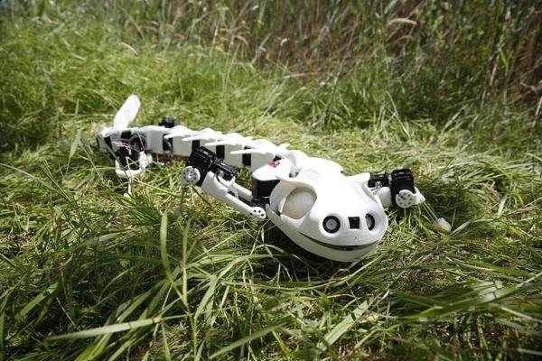 Robot mimics vertebrate motion