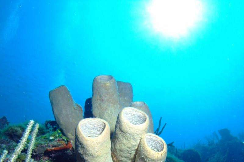 Scientists call for new strategy to study climate change impacts on coral reefs