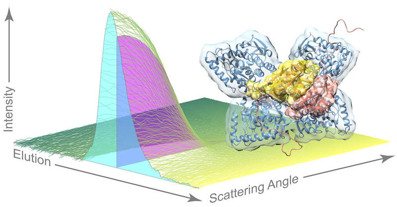 Scientists capture the elusive structure of essential digestive enzyme