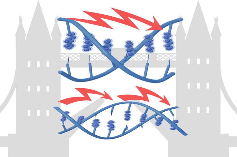 Scientists engineer tunable DNA for electronics applications