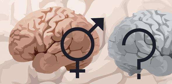 Sex and the brain: fruitless research?