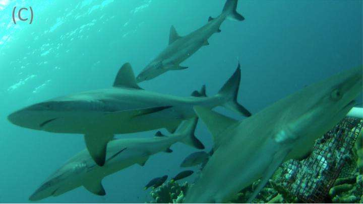 Shark population threatened due to fin harvesting
