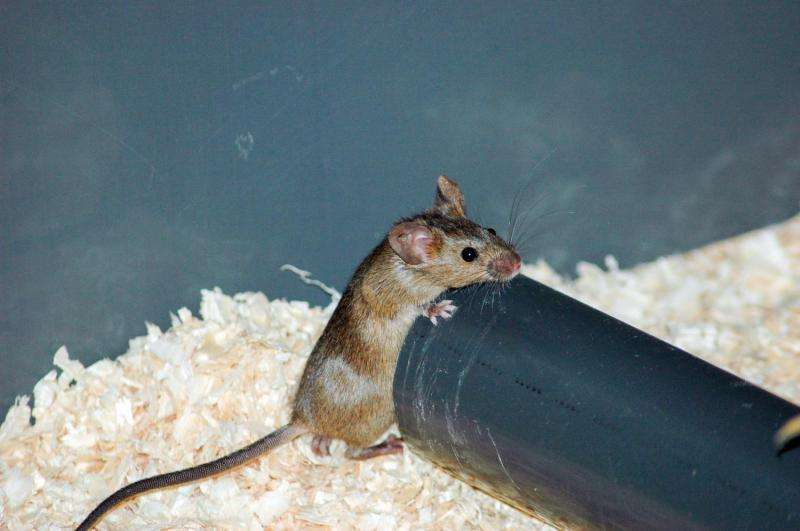 Sick animals limit disease transmission by isolating themselves from their peers