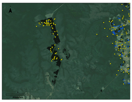 Significant deforestation in Brazilian Amazon goes undetected, study finds