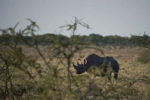 Since 2012, Namibia has sold licences each year to kill individual rhinos, saying the money is essential to fund conservation pr