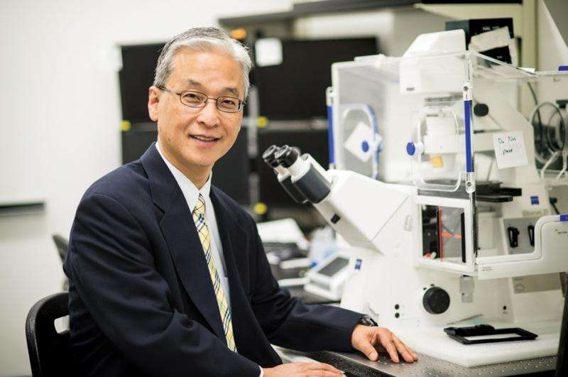 Sinister shock: ONR researcher studies how explosive shock waves harm the brain