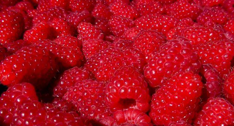 Six new studies point to red raspberry's potential anti-inflammatory properties