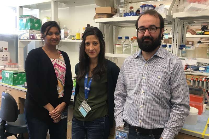SLU research: Silencing fat protein improves obesity and blood sugar