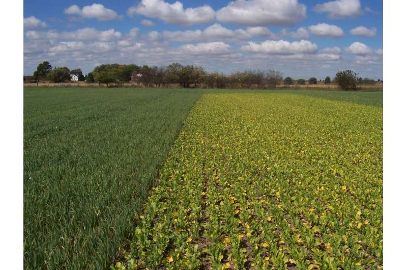 Soil management may help stabilize maize yield in the face of climate change