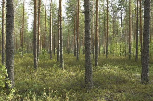 Soil modelling to help curb climate change