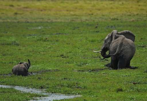 Some 50,000 elephants are poached every year in Africa, leaving some only 450,000 elephants across the continent