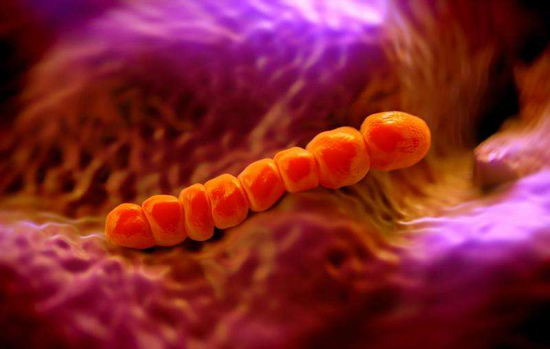 Special properties of pneumococci affect their ability to cause meningitis