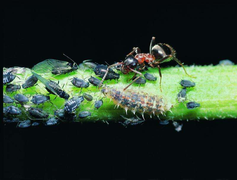 Species-rich food webs produce biomass more efficiently