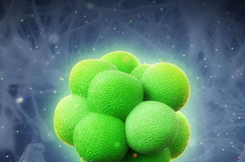 Squeezing cells into stem cells